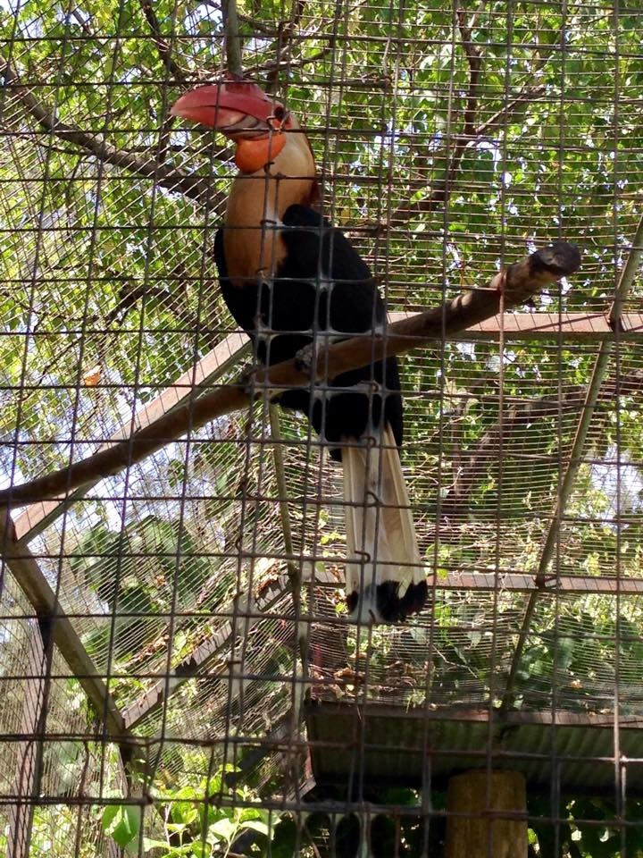 Bird in Crocolandia, Cebu