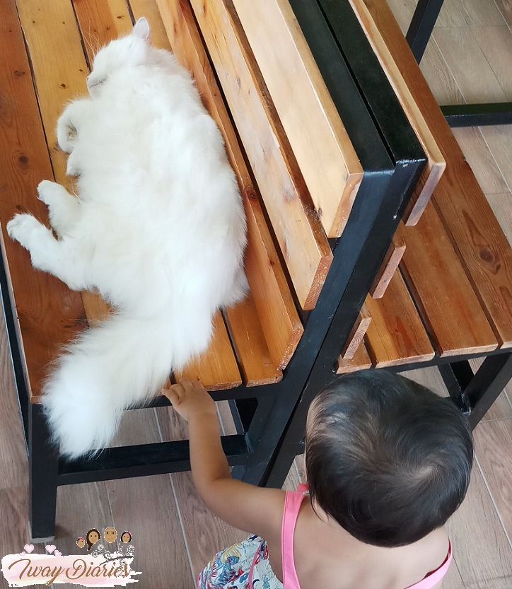 Cat Cafe Cebu