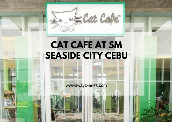 Cat Cafe Cebu - featured